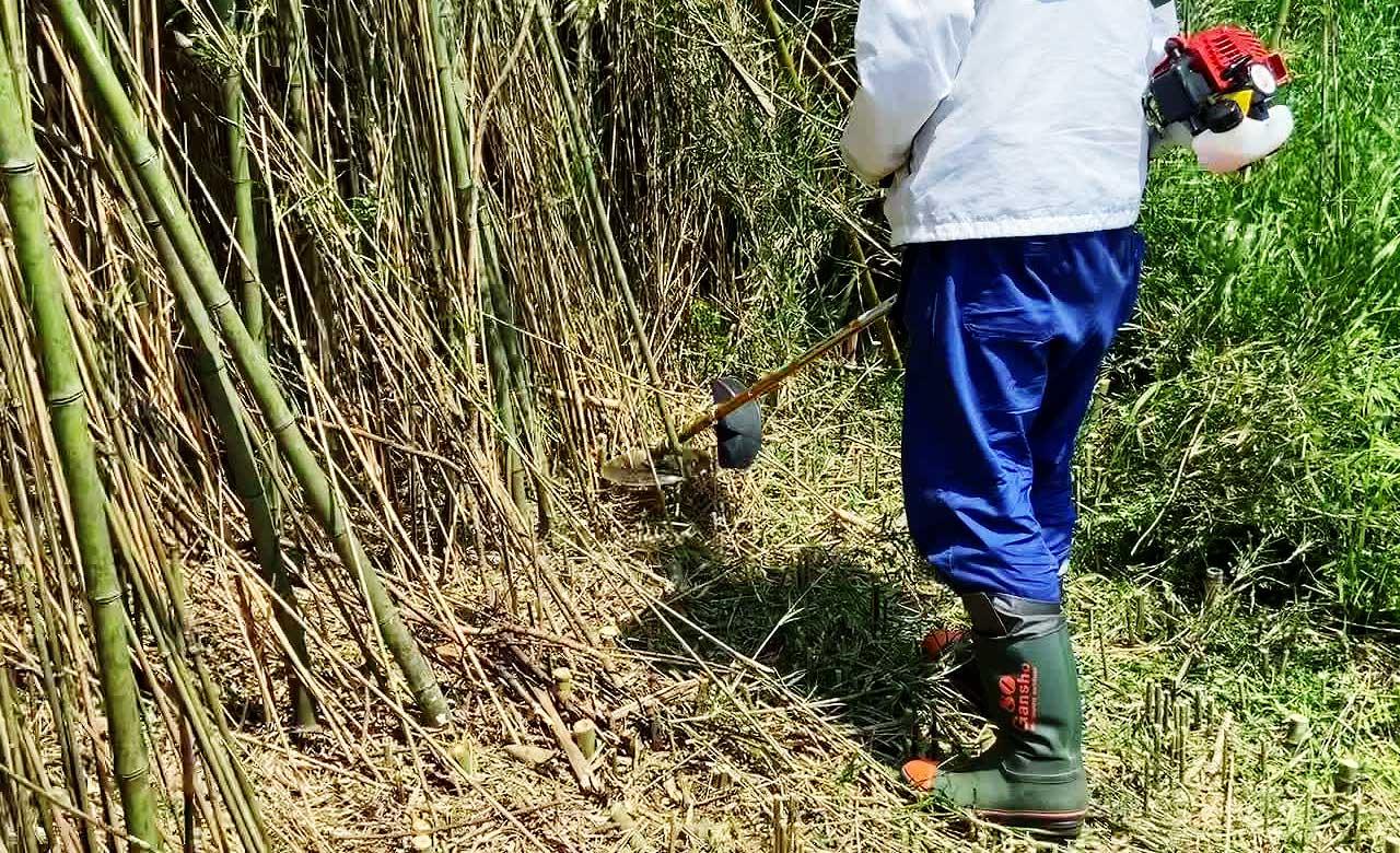 山林探し⑦ 竹草刈り体験