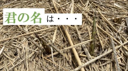開拓コラム 竹の種類