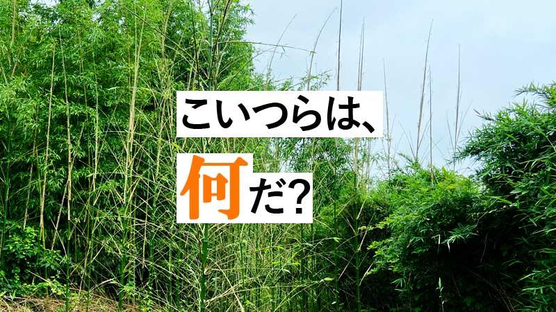 開拓Act.5 |竹の逆襲