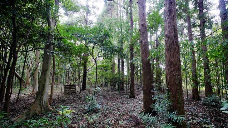 開拓Act.10|ラボリエの森散歩