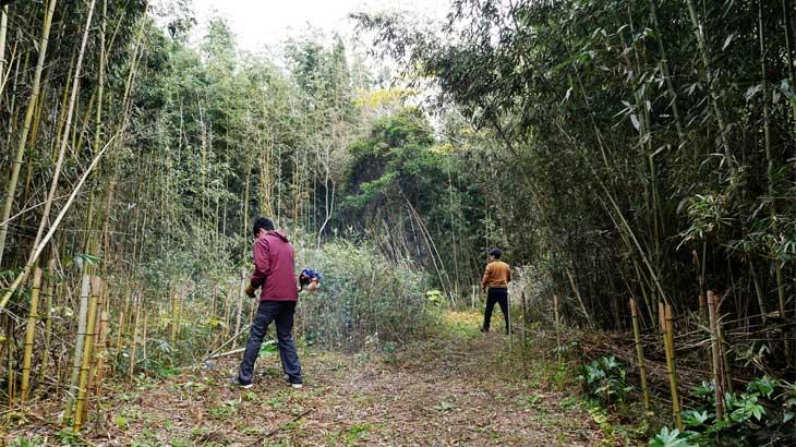 開拓Act.11|竹伐採で道の拡張